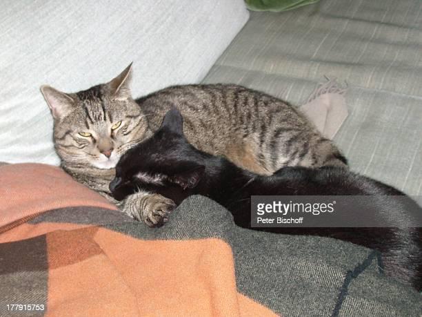 Katzen von Gunnar Möller und Christiane Hammacher, Homestory, Prenzlauer Berg , Berlin, Deutschland, Europa, Tier, Haustier, Katze, getigert,...