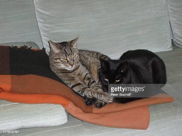 Katzen von Gunnar Möller und Christiane Hammacher Homestory Prenzlauer Berg Berlin Deutschland Europa Tier Haustier Katze getigert schwarz Sofa Couch...