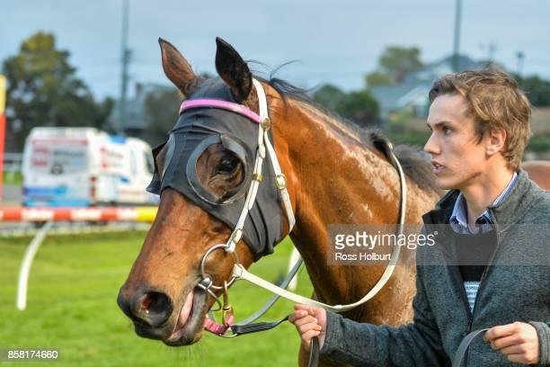 Kawabata after winning the TSOLS TIPS Handicap at Moonee Valley Racecourse on October 06 2017 in Moonee Ponds Australia