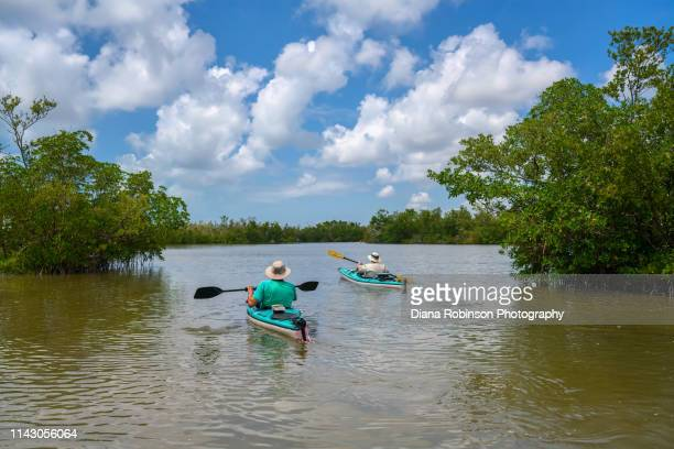 kayakers at rookery bay national estuarine research reserves located at the northern end of the ten thousand islands national wildlife refuge on the gulf coast of florida - rookery stock pictures, royalty-free photos & images