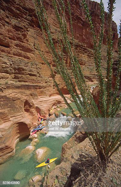 kayakers in havasu creek - havasu creek stock photos and pictures
