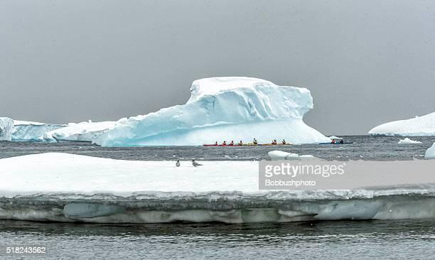 Kajakfahren zwischen den Eisbergen treiben in der Antarktis