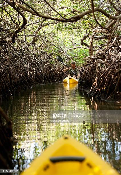 kayaking in mangroves - カリブ海オランダ領 ストックフォトと画像