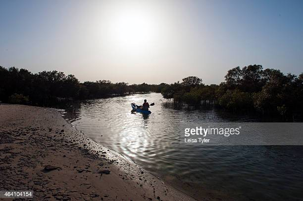 Kayaking in the mangrove forest on Sir Bani Yas an island in the Persian Gulf The once private retreat of the United Arab Emirates founder the former...