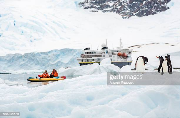 kayaking near penguins in neko harbor - antarctica stock pictures, royalty-free photos & images