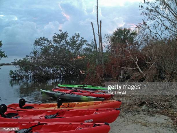 Kayaks lined up for a moonlight tour of a bioluminescent bay on Indian River Lagoon