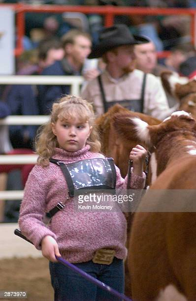 Kayla Edwards of Ft Payne Alabama shows a Poled Hereford breeding heifer into the arena during a judging at the National Western Stock Show January...