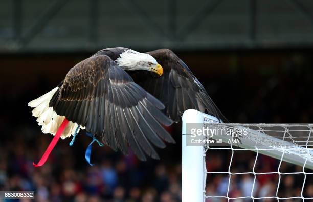 Kayla the Eagle mascot of Crystal Palace sits on the goal before the Premier League match between Crystal Palace and Hull City at Selhurst Park on...
