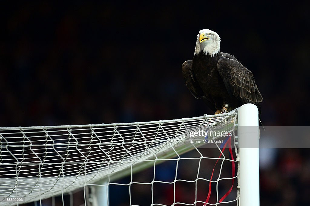 Kayla the Seaeagle prepares to fly prior to kickoff during the Barclays Premier League match between Crystal Palace and Liverpool at Selhurst Park on May 5, 2014 in London, England.