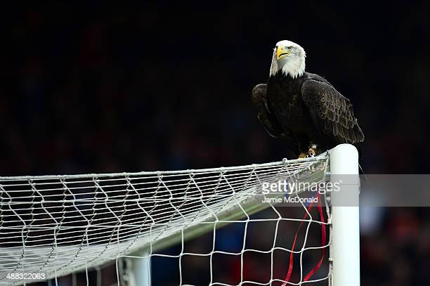 Kayla the Seaeagle prepares to fly prior to kickoff during the Barclays Premier League match between Crystal Palace and Liverpool at Selhurst Park on...