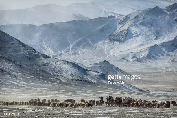 kazakh eagle hunters nomadic migration - dramatische landschaft stock-fotos und bilder