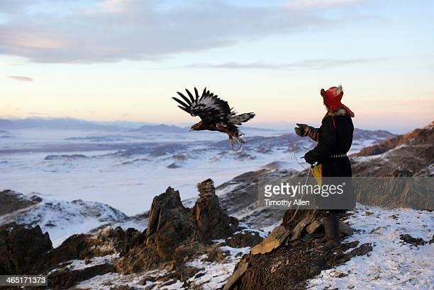 kazakh golden eagle hunter releases eagle - モンゴル ストックフォトと画像