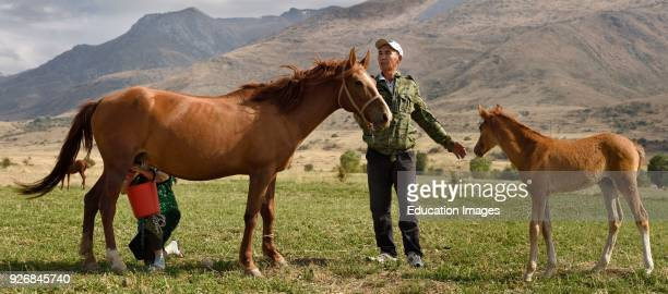 Kazakh man holding foal away from nursing mare being milked by wife in Aksu Zhabagly Kazakhstan