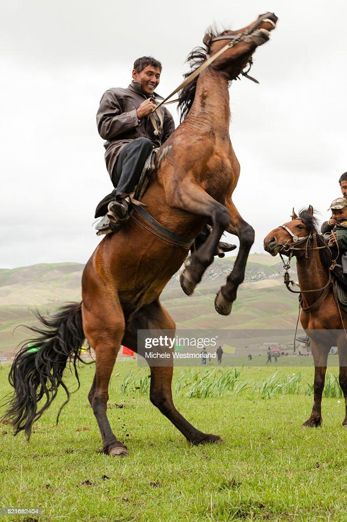 kazakh man rearing horse stock photo getty images