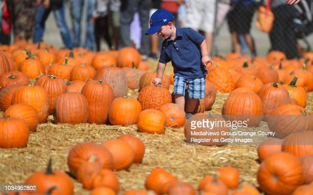 Keaton Robertson of Rancho Palos Verdes finds the perfect wart covered pumpkin at Green Hills Memorial Park in Rancho Palos Verdes on Sunday October...