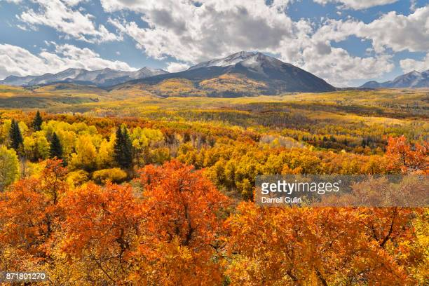 Kebler Pass area fall color on aspen and oak trees.