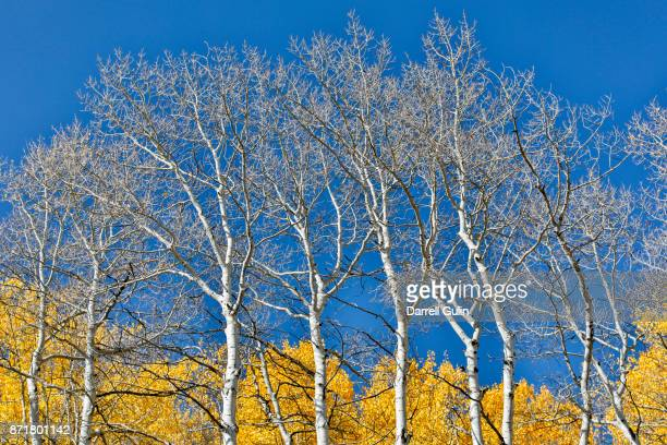 kebler pass panorama - bare tree stock pictures, royalty-free photos & images