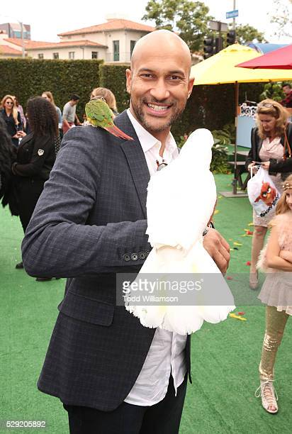 Keegan MichaelKey attends the after party for the premiere Of Sony Pictures' Angry Birds on May 7 2016 in Westwood California