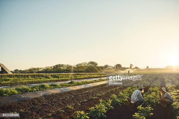 keep calm and farm on - organic farm stock pictures, royalty-free photos & images