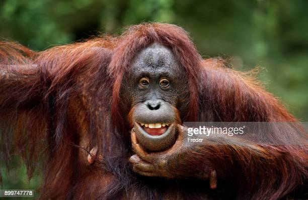 keep smiling - primate stock pictures, royalty-free photos & images