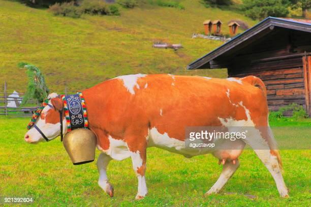keep walking! Almabtrieb: Cow with flower crown parade – Zillertal alps, Tirol – Austria