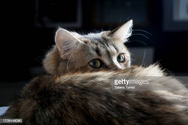 keep your whiskers towards the sunshine and shadows will fall behind you - {{ collectponotification.cta }} stock pictures, royalty-free photos & images