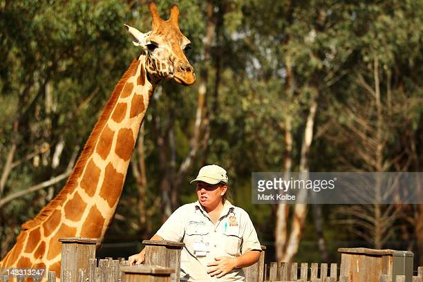 A keeper gives a talk at the giraffe enclosure at Taronga Western Plains Zoo on April 20 2012 in Dubbo Australia The popular 35 year old Dubbo zoo is...