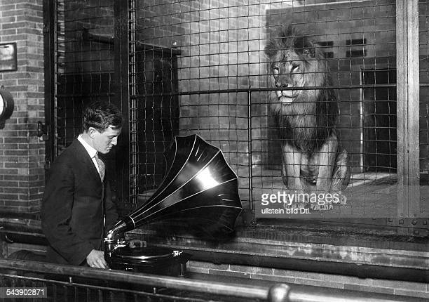 Keeper play music with a gramophone in front of a cage of a lion Photographer Philipp Kester 1909Vintage property of ullstein bild