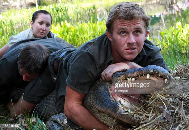 Keepers Carly Pound John Mostyn and Billy Colette restrain the park's oldest American male alligator during the annual Alligator egg harvest at the...