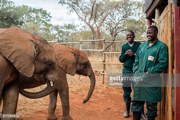 Keepers of the Elephant Orphanage Project and orphan baby elephants at the Lilayi Elephant Nursery in Lusaka Zambia on 18 July 2016 The Elephant...