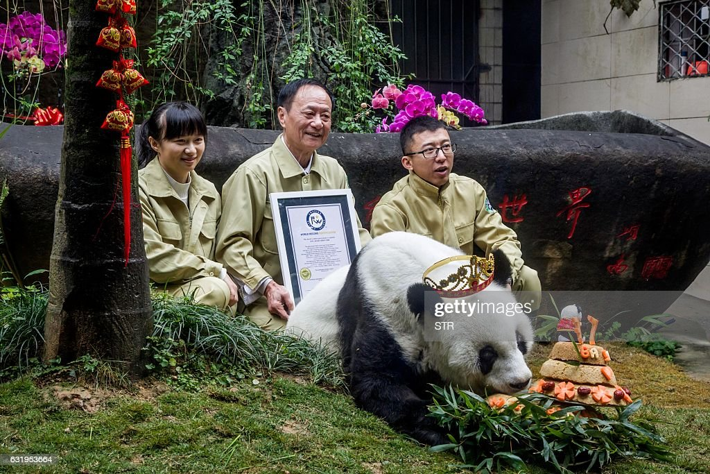 Keepers pose for photos with giant panda Basi on her birthday at Fuzhou Panda World in Fuzhou, east China's Fujian province on January 18, 2017. Basi, which celebrated her 37th birthday on January 18, is the world's oldest giant panda in captivity. / AFP / STR / China OUT
