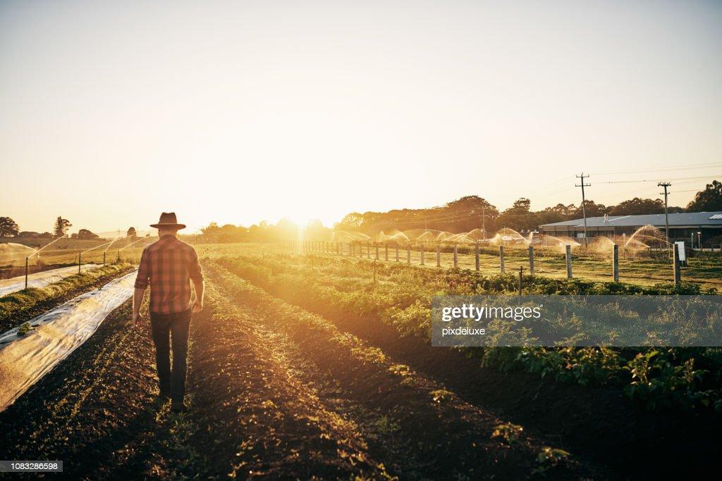 Keeping a close watch on his crops : Stock Photo