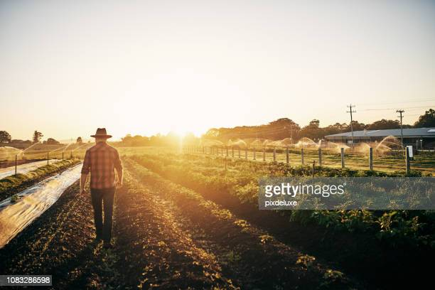 keeping a close watch on his crops - sustainability stock photos and pictures