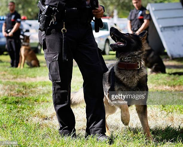 K9 keeps an eye on his City of Miami police department partner during the graduation ceremony of the Canine Academy October 17 2007 in Miami Florida...
