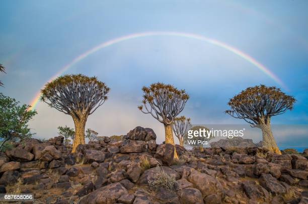 Keetmanshoop Namibia Quiver tree forest with rainbows overhead in the Playground of the Giants