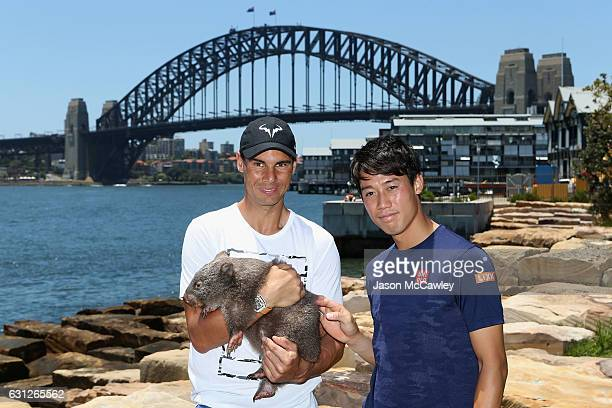 Kei Nishikori and Rafael Nadal pose with Lola the wombat ahead of the Fast4International Exhibition this evening at the ICC Sydney Theatre on January...