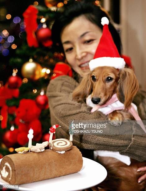 Keiko Masukawa holds a threeyearold dachshund Hana next to a Christmas cake for dogs at Tokyo's Takashimaya department store 02 November 2005...