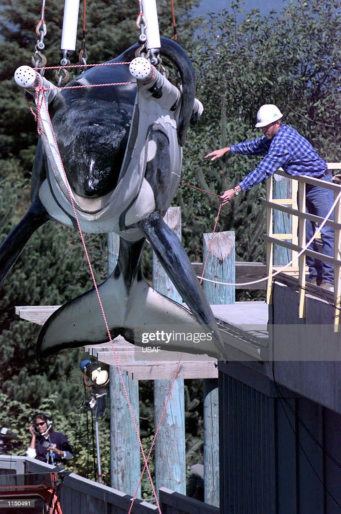 Keiko, the killer whale : News Photo