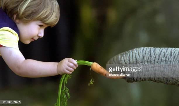 Keine Angst vor großen Tieren hat die zweijährige Larissa am 13.6.2000 bei ihrem Besuch im Opel-Zoo in Kronberg - zumindest, solange nur der rüssel...