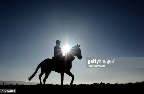 Keith Schous riding Trifolium on the gallops at Cheltenham racecourse on March 09 2014 in Cheltenham England