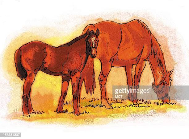 Keith Simmons color illustration of a colt with mare