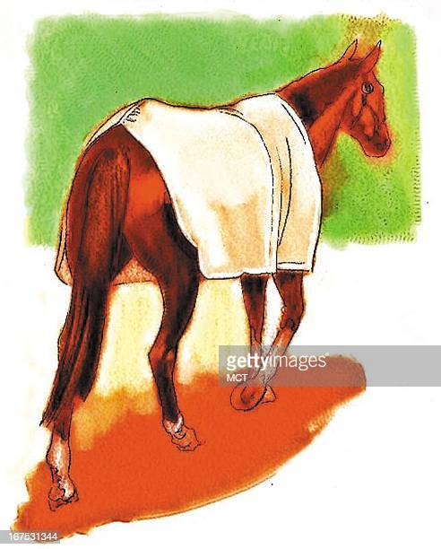 Keith Simmons color illustration of racehorse at rest wearing a blanket