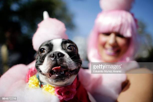 Keithus, a Boston Terrier and his owner in costume attend the 27th Annual Tompkins Square Halloween Dog Parade in Tompkins Square Park on October 21,...
