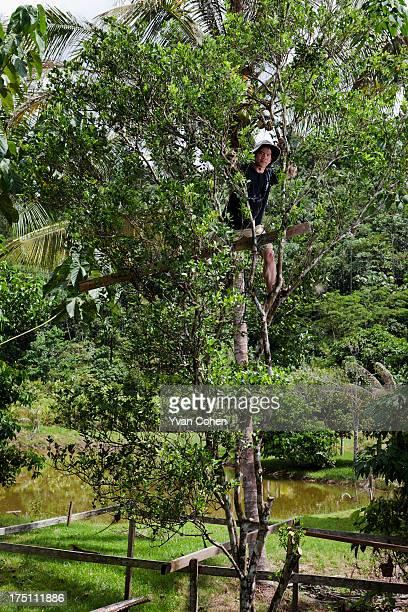 Kelabit environmental activist Mutang Urud climbs into a tree to retrieve some fruit A friend and collaborator with Swiss environmental activist...