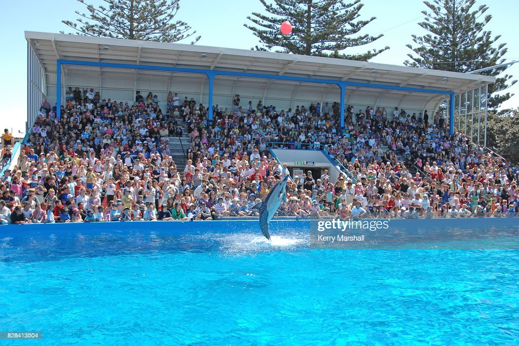 Marineland of New Zealand, Napier - Archive Photos : News Photo