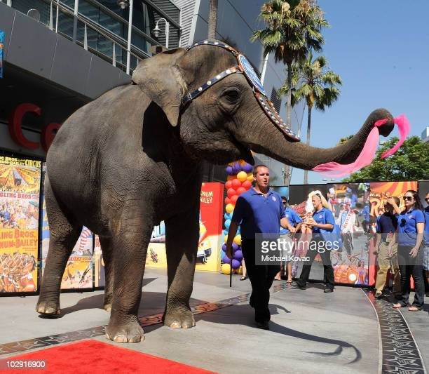 KellyAnne the Elephant waves goodbye after unveiling the star at the star dedication ceremony for iconic circus founder PT Barnum at Staples Center...