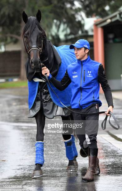 Kementari parades for the media ahead of SaturdayÕs $1 million New Zealand Bloodstock Memsie Stakes during a media opportunity at GodolphinÕs Carbine...