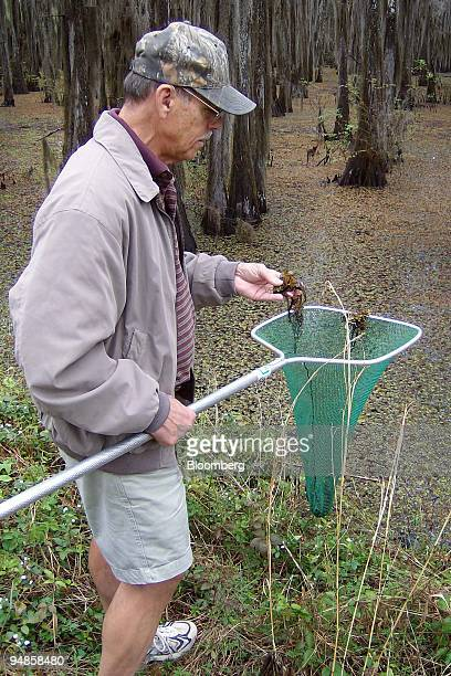 Ken Shaw head of the Cypress Valley Navigation District which oversees the boat lanes on Caddo Lake inspects a net containing giant salvinia...