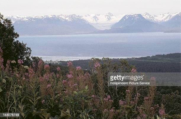 Kenai Mountains Homer Alaska
