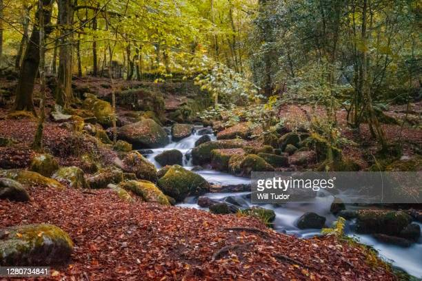 kennal valley - autumn stock pictures, royalty-free photos & images